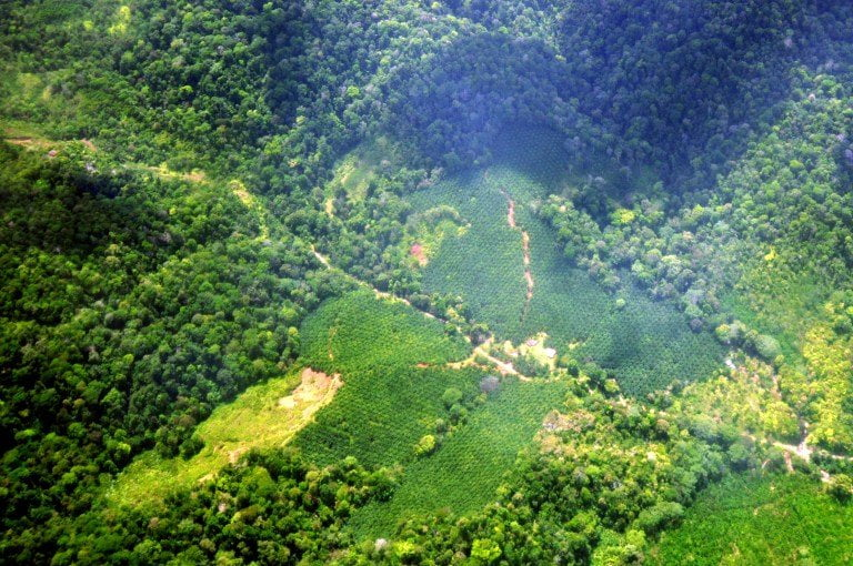 Costa Rica tassa le fossili per aumentare le foreste