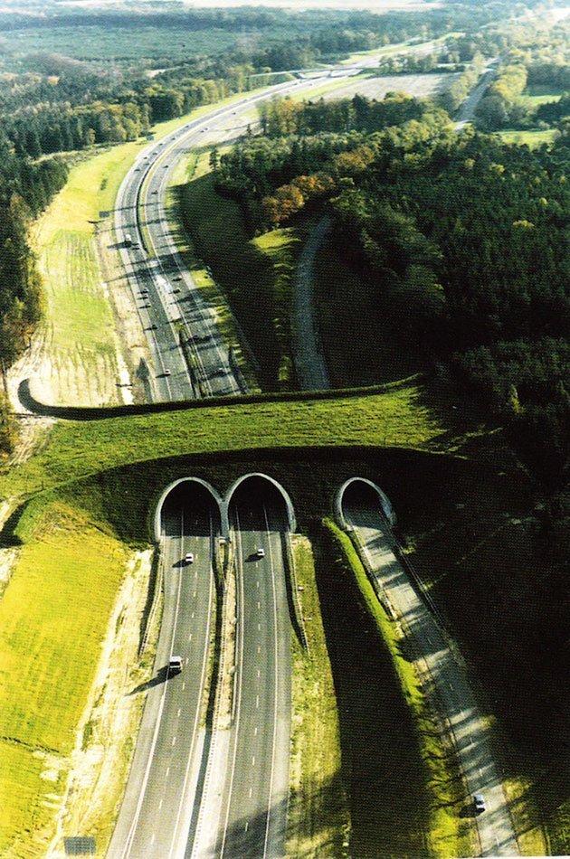 Ecodotti in Olanda