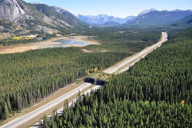 Ecodotti in Canada