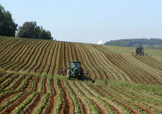 Crisi alimentare, coltivazioni intensive