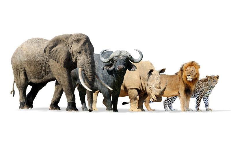 previsioni a lungo termine, mammiferi