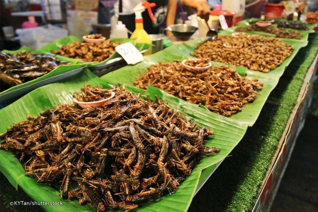 crisi alimentare, proteine dagli insetti