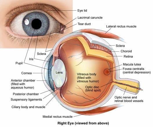 Trapianto di cornea