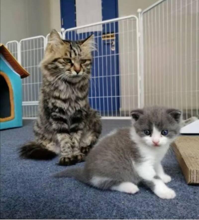 gattino clonato