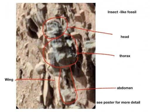Altre prove di vita su Marte secondo lo studio del professor William Romoser