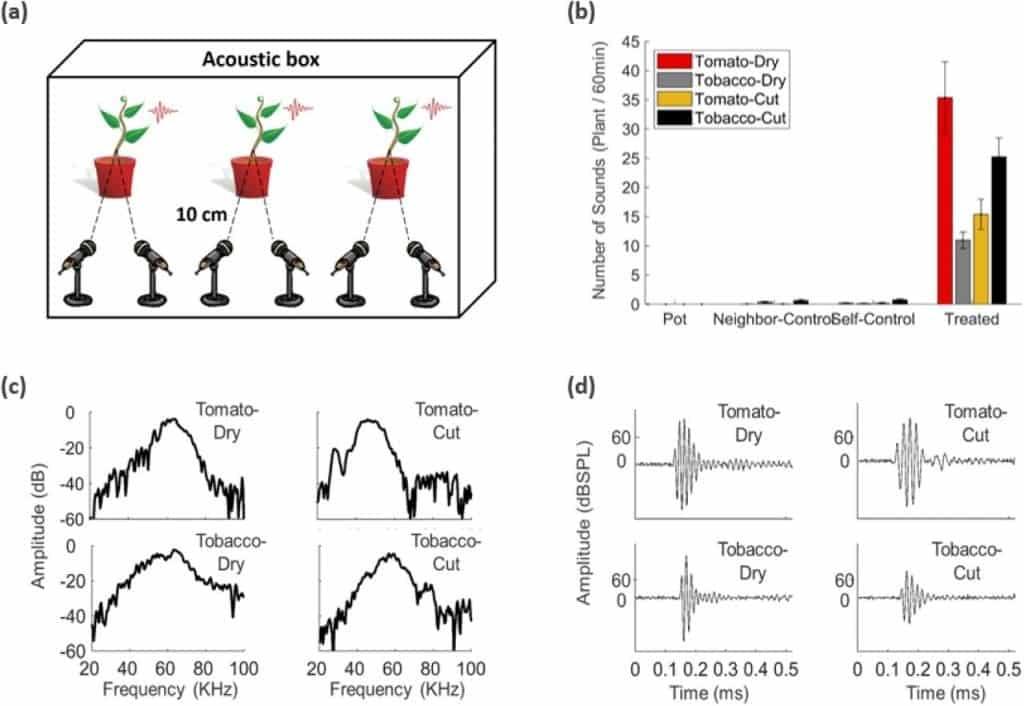 Le piante parlano con gli ultrasuoni