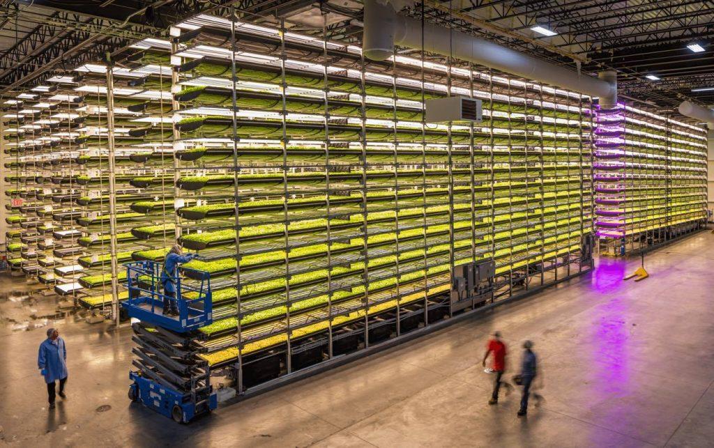 Aerofarms, fattorie verticali contro le disuguaglianze alimentari