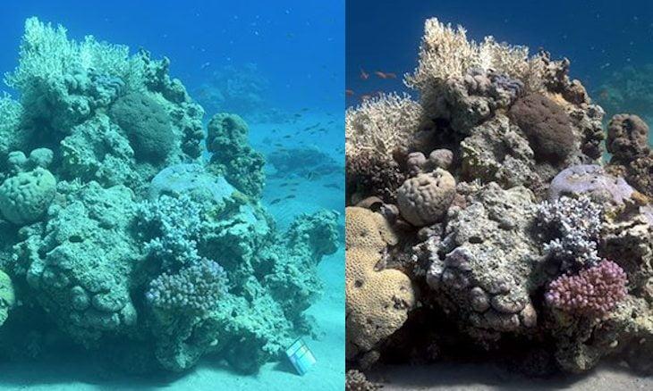 Sea-thru, algoritmo che rimuove l'acqua dalle foto subacquee