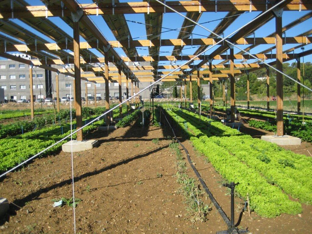 Agrivoltaico, agricoltura e fotovoltaico