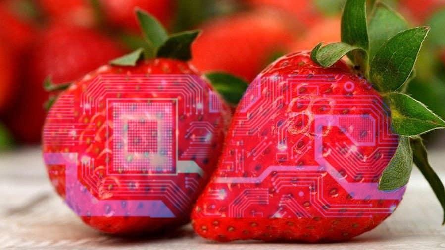 """Elettronica commestibile, team italiano la """"tatua"""" sul cibo per monitorarlo"""