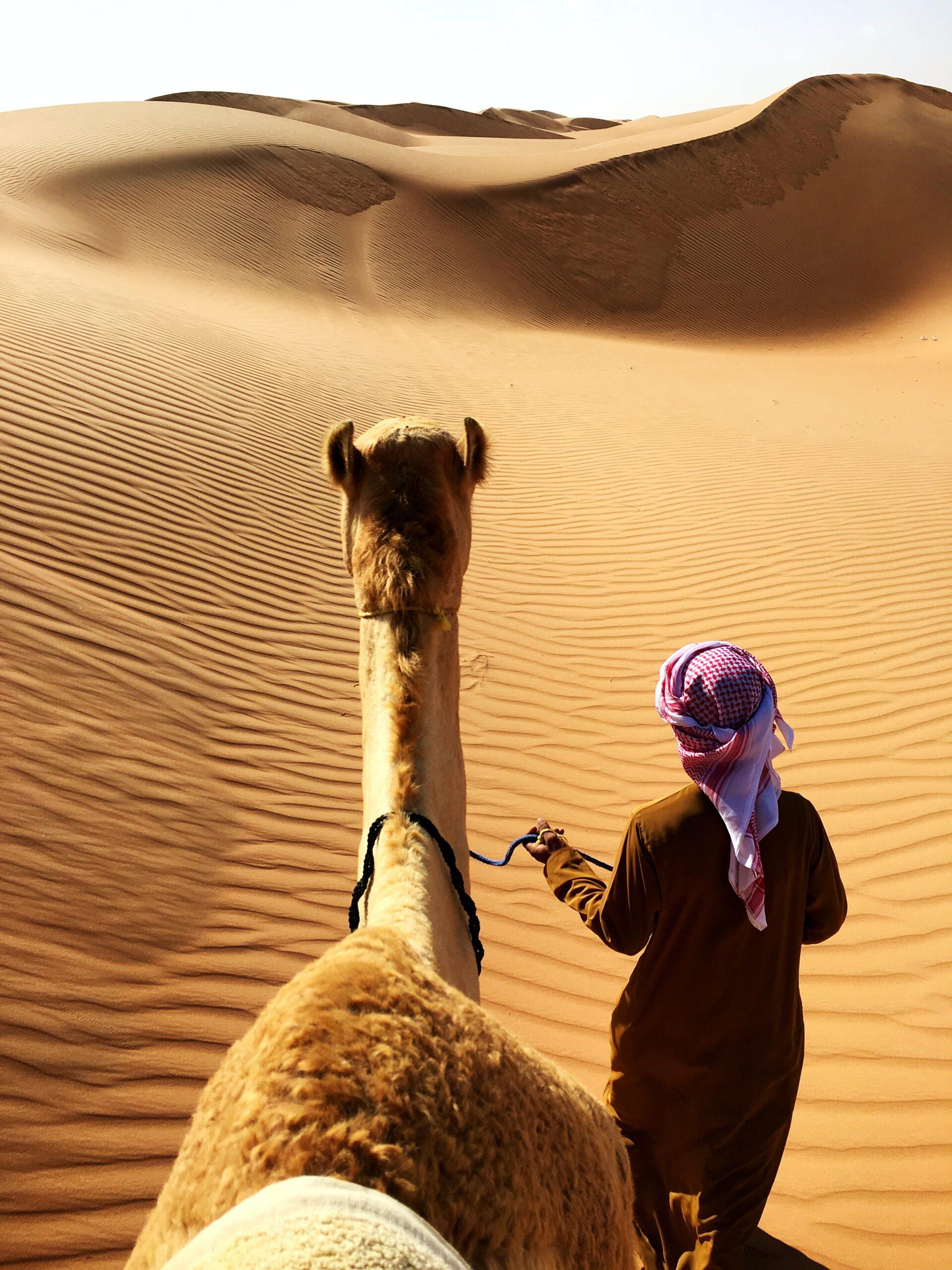 Camel airgel