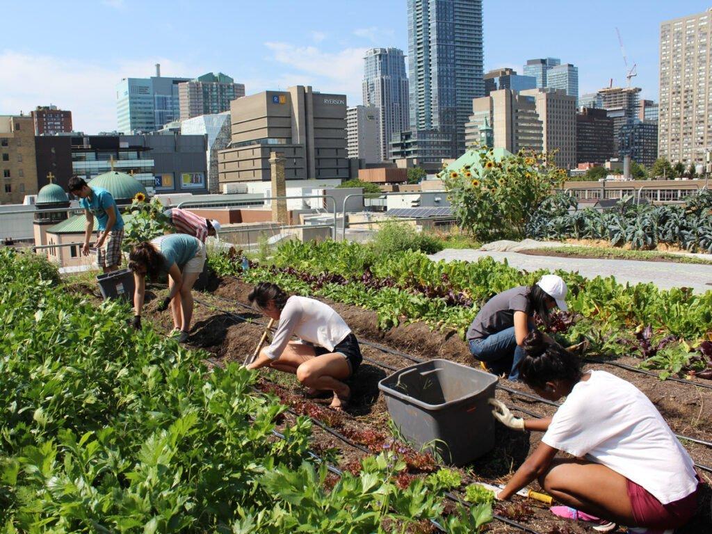 tetti verdi agrivoltaico