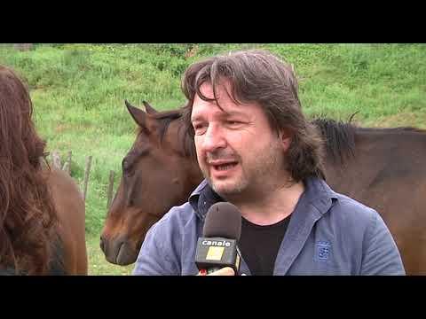 Ricerca sui cavalli