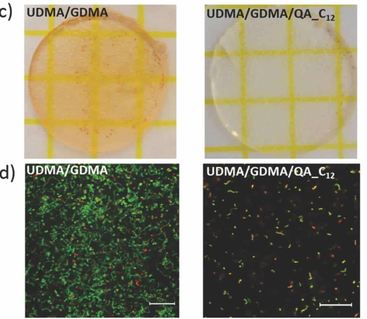 I puntini rossi sono batteri morti, quelli verdi sono vivi. Sulla sinistra c'è un modello di resina senza i sali speciali, a destra invece sono presenti: l'effetto è enormemente diverso.